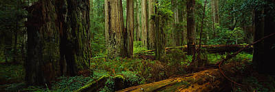 Olympic National Park Photograph - Trees In A Forest, Hoh Rainforest by Panoramic Images