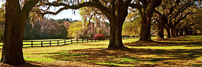 Mount Pleasant Photograph - Trees In A Garden, Boone Hall by Panoramic Images