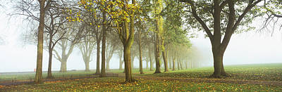 Fallen Leaf Photograph - Trees In A Park During Fog, Wandsworth by Panoramic Images