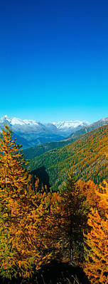 Trees In Autumn At Simplon Pass, Valais Print by Panoramic Images