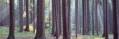 Bohemia Photograph - Trees In The Forest, South Bohemia by Panoramic Images