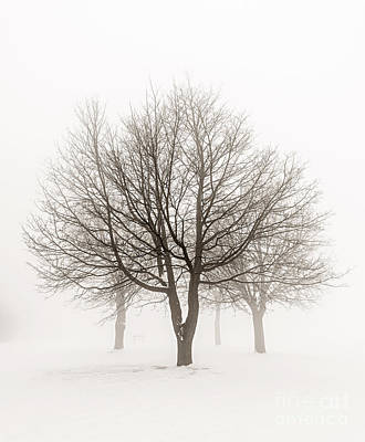 Brown Tones Photograph - Trees In Winter Fog by Elena Elisseeva