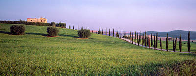 Dirt Roads Photograph - Trees On A Hill, Pienza, Siena by Panoramic Images
