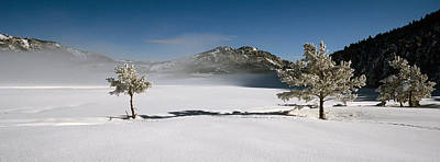 Cold Temperature Photograph - Trees On A Snow Covered Landscape by Panoramic Images