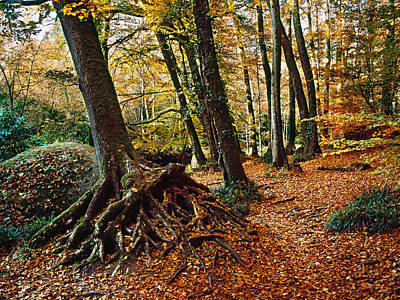 Fallen Leaf Photograph - Trees With Granite Rock At Huelgoat by Panoramic Images