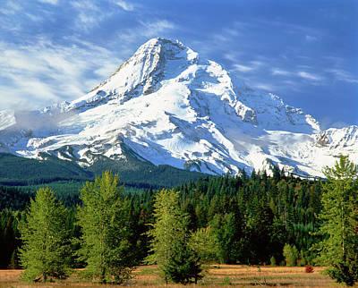 Trees With Snowcapped Mountain Range Art Print