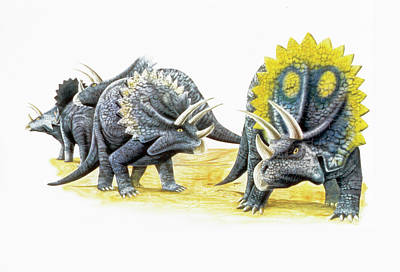 Triceratops Dinosaurs Art Print