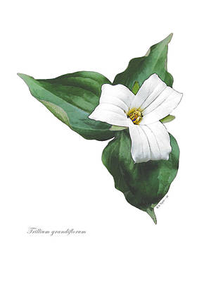 Digital Art - Trillium 1 by Helene U Taylor