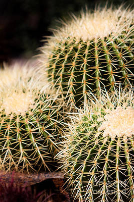 Photograph - Triple Cactus by John Wadleigh