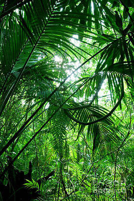Climate Photograph - Tropical Green Forest by Michal Bednarek