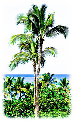Photograph - Tropical Palm Trees by Athena Mckinzie