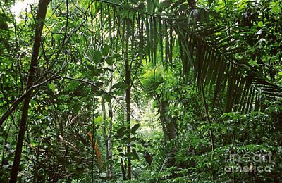 Tropical Rainforest Art Print