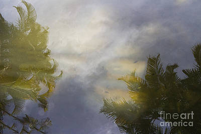 Tropical Reflections Art Print by Anne Rodkin