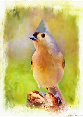 Tufted Titmouse Photograph - Tufted Titmouse Standingtall - Digital Paint 3 by Debbie Portwood