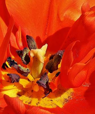 Photograph - Tulip Abstract by Bruce Bley