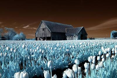 Photograph - Tulip Barn by Rebecca Parker