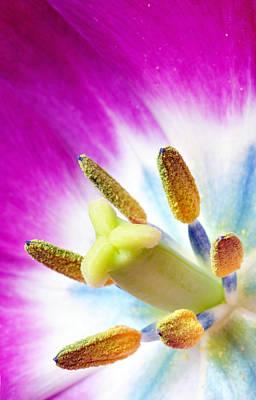 Photograph - Tulip Blossom Macro by Martin Capek