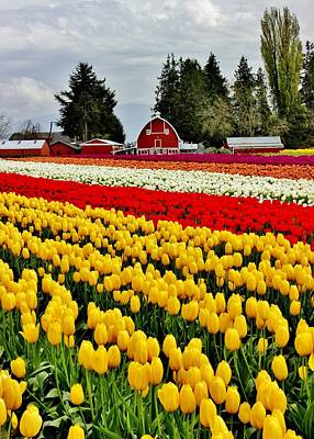 Photograph - Tulip Farms by Benjamin Yeager