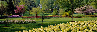 Tree Tulips Photograph - Tulip Flowers In A Garden, Sherwood by Panoramic Images