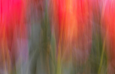 Photograph - Tulip Waves by Marion McCristall