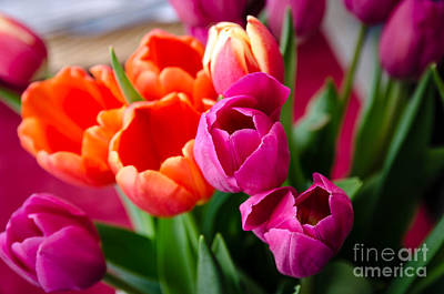 Nature Photograph - Tulips by Faith Locke Siewert