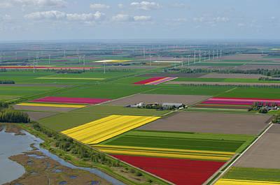Flevoland Photograph - Tulips Fields, Zeewolde by Bram van de Biezen