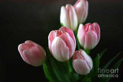 Photograph - Tulips On Display by Cathy Dee Janes