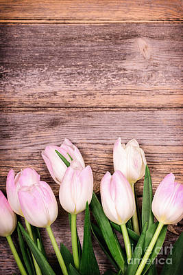 Tulips Over Old Wood Art Print