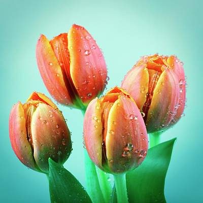 Tulips Art Print by Wladimir Bulgar