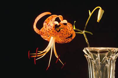 Tiger Lillies Photograph - Turk's-cap Lilly Lilium Superbum by Keith Webber Jr