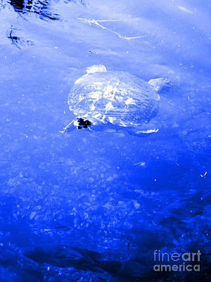 Photograph - Turtle. Blue by Oksana Semenchenko