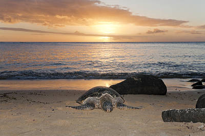 Sea Turtle Photograph - Turtle On Beach by M Swiet Productions