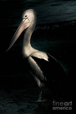 Contemplating Photograph - Twilight Pelican by Jorgo Photography - Wall Art Gallery