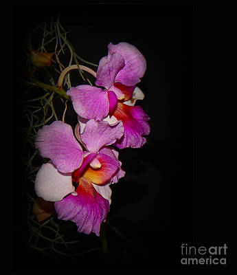 Photograph - Two Orchids by Judi Bagwell