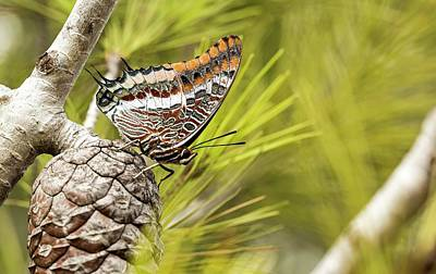 Two-tailed Pasha (charaxes Jasius) Print by Photostock-israel