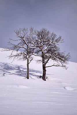 Photograph - Two Trees by Richard Verkuyl