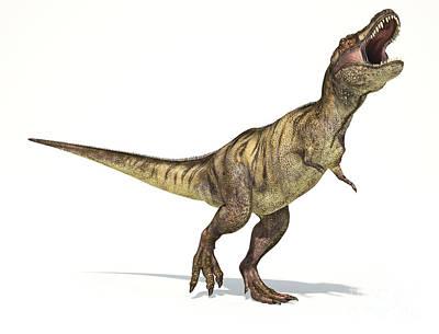 Anger Digital Art - Tyrannosaurus Rex Dinosaur On White by Leonello Calvetti