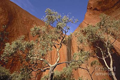 Photograph - Uluru Australia by Rudi Prott
