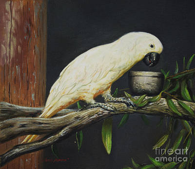 Umbrella Cockatoo Art Print by Alberto Herrera