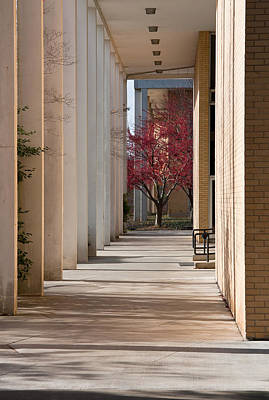 Photograph - Unca Campus by Melinda Fawver