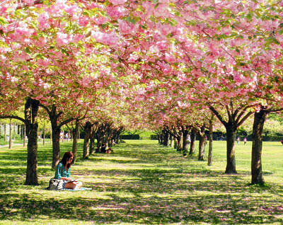 Art Print featuring the photograph Under The Cherry Blossom Trees by Nina Bradica