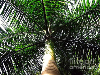 Photograph - Under The Palm by Anita Lewis