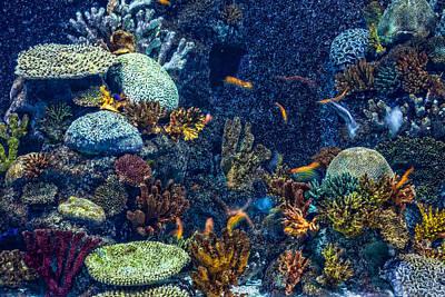 Clown Fish Photograph - Underwater World by Dobromir Dobrinov