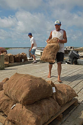 Oyster Photograph - Unloading Harvested Oysters by Jim West