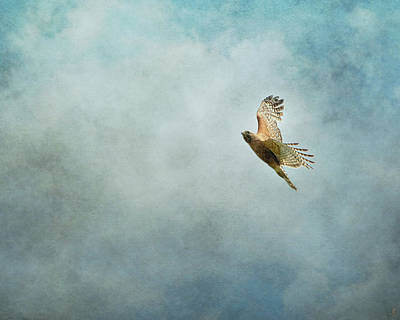 Buteo Lineatus Photograph - Up Up And Away by Jai Johnson