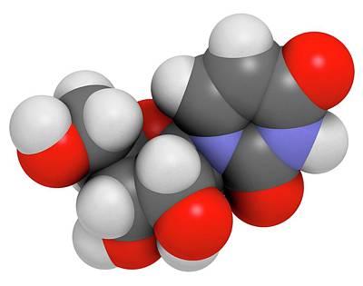 Nucleoside Photograph - Uridine Nucleoside Molecule by Molekuul