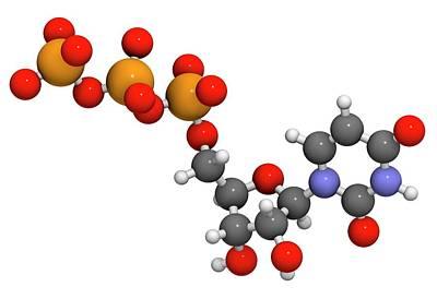 Uridine Triphosphate Nucleotide Molecule Art Print