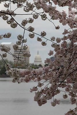Us Capitol - Cherry Blossoms - Washington Dc - 01131 Art Print by DC Photographer