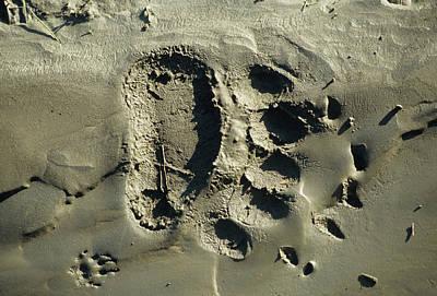 Usa, Alaska, Grizzly Bear Tracks Art Print