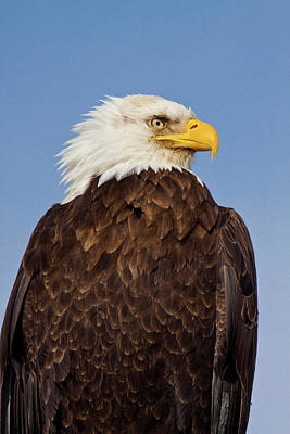 Homer Photograph - Usa Alaska Homer Eagle Portrait by Terry Eggers